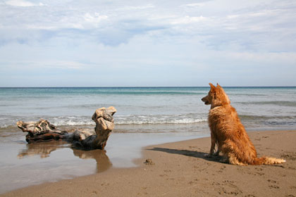 Hundestrand in Andalusien