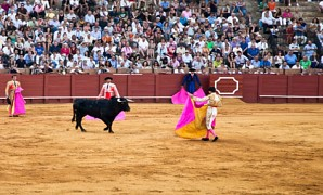 Corrida in der Real Maestranza in Sevilla